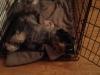 Watcher Boaz ook op mijn logeeradres slaap ik heerlijk relaxt