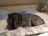 hoover dat slaapt goed op het bed van mijn baasjes
