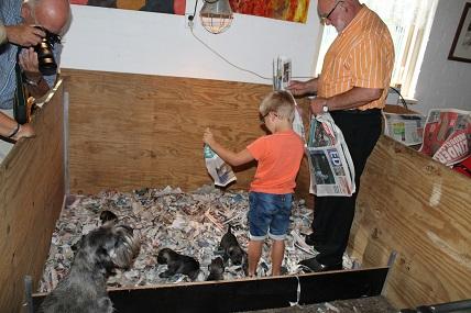 31 augustus even opa helpen met de krantenknipsels