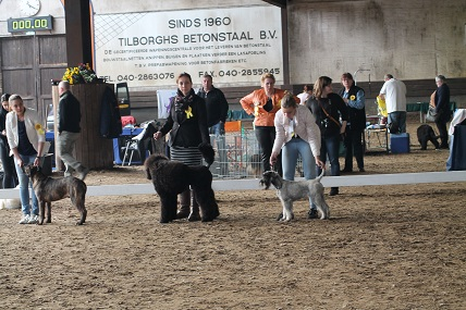 met alle pups in de ring